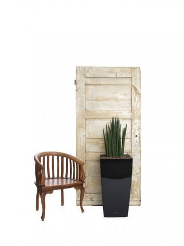 Sansevieria cylindrical tower